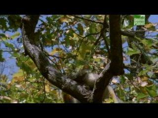 """Документальный фильм """"История Ситы.Лесные тигры."""" (2000)"""